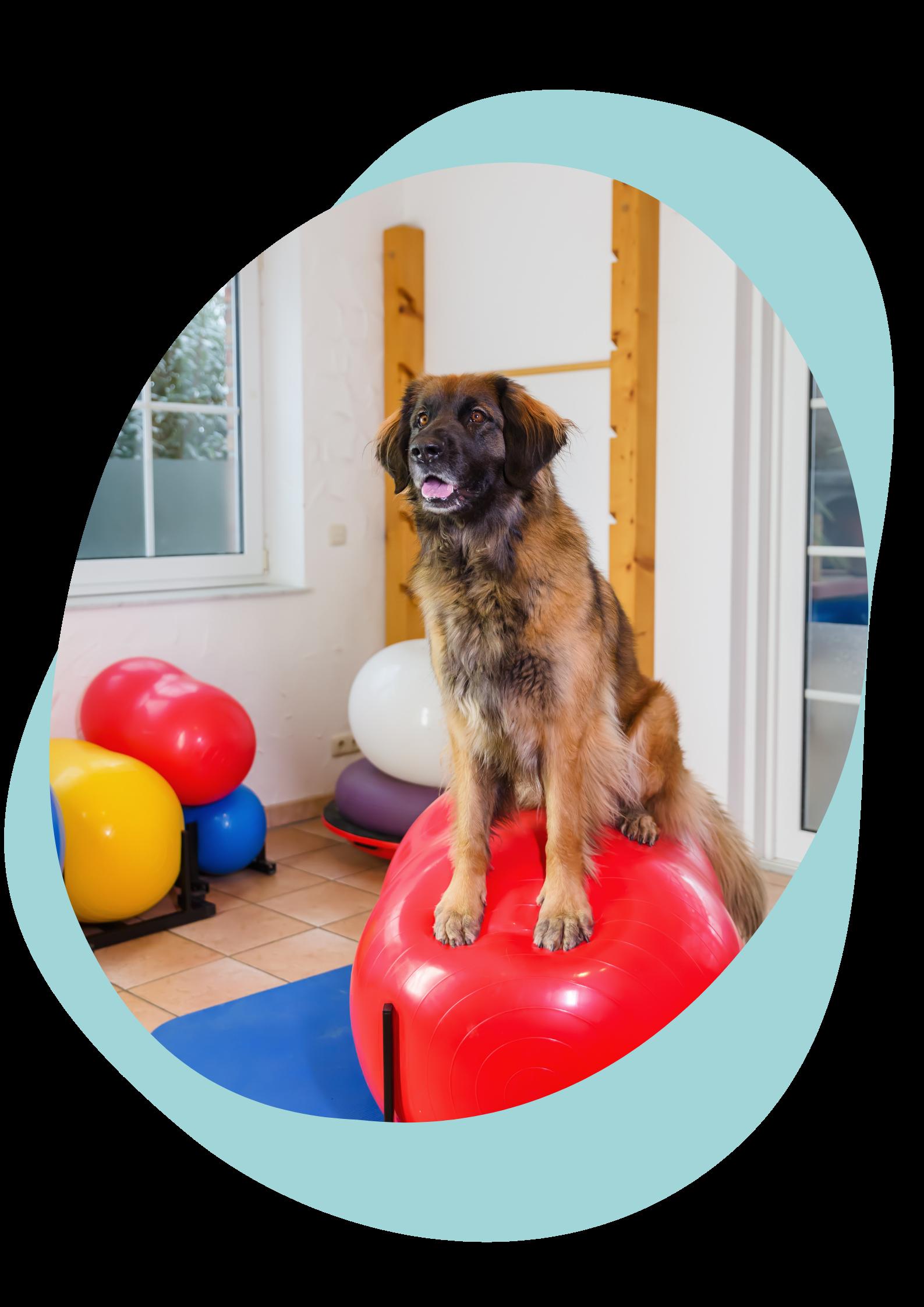 Physiothérapie Clinique vétérinaire animara