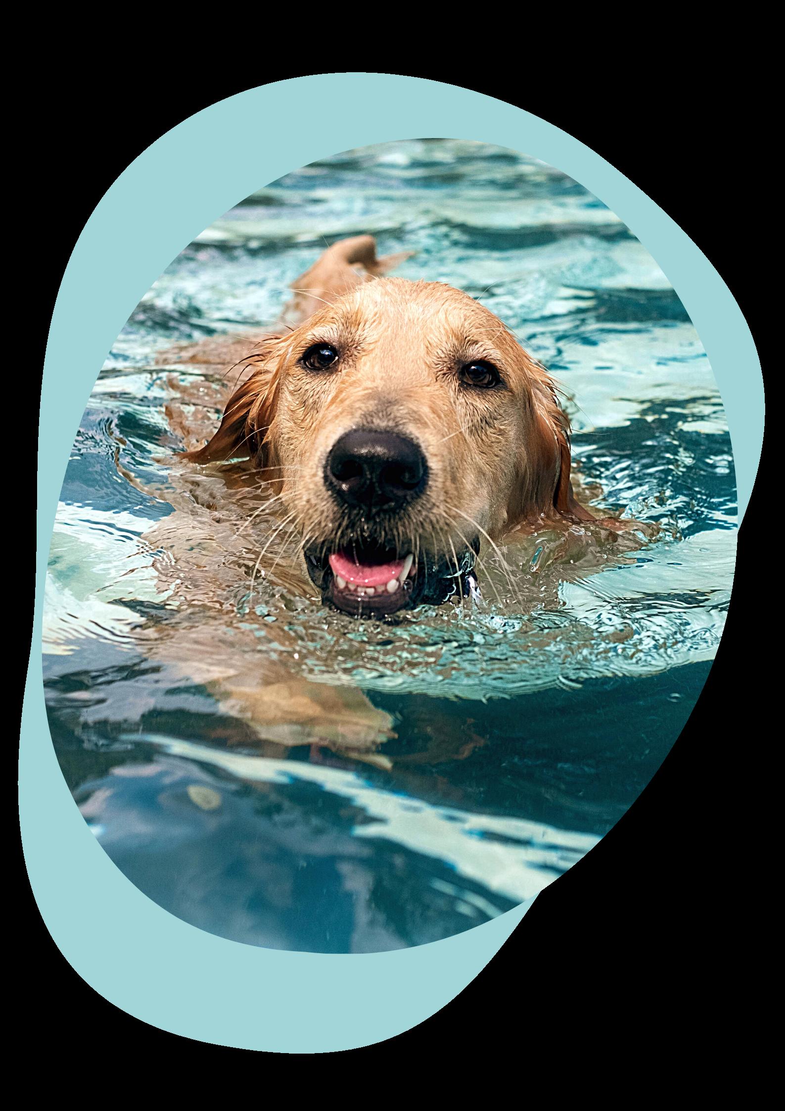hydrothérapie Clinique vétérinaire animara